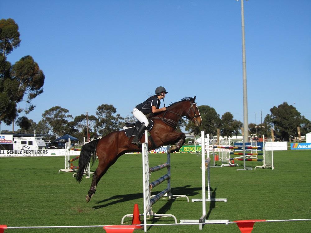 Loxton Show Horses